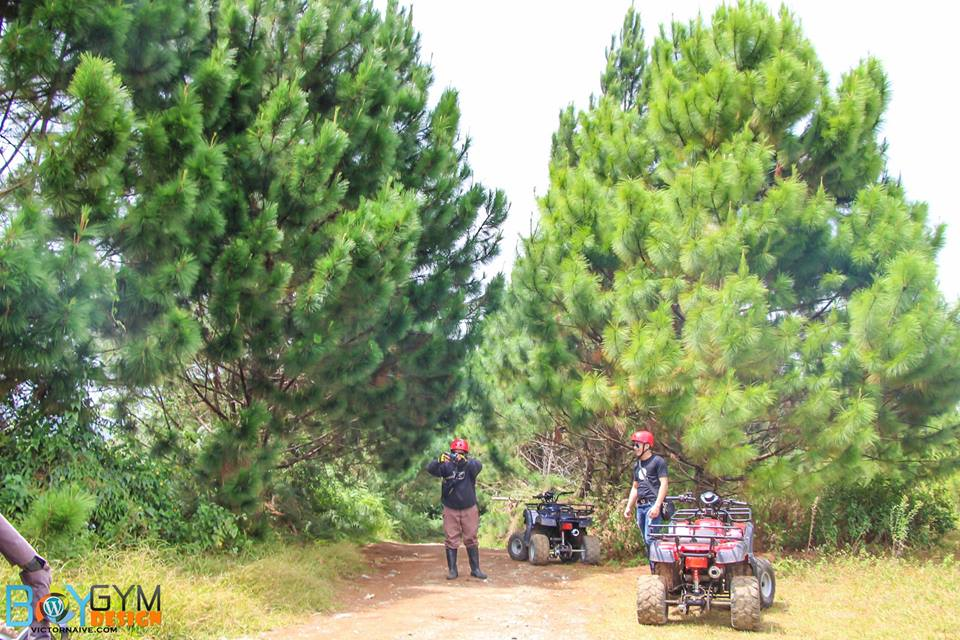 Pine Trees ATV Ride