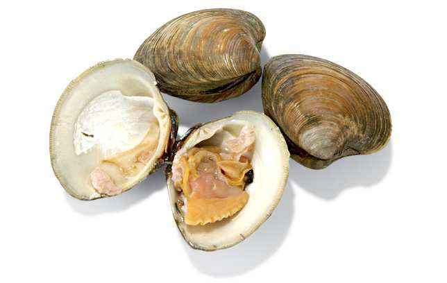 happy foods clams