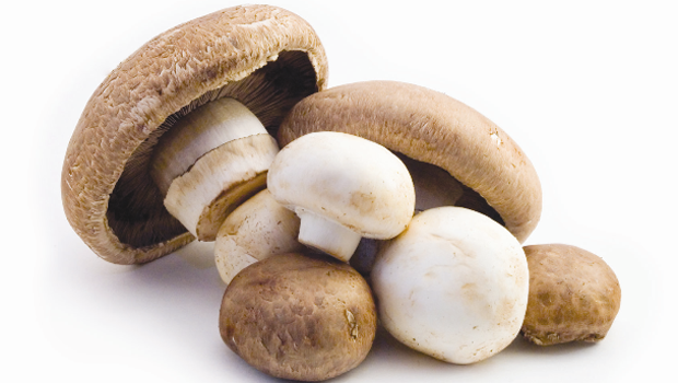 happy foods mushrooms
