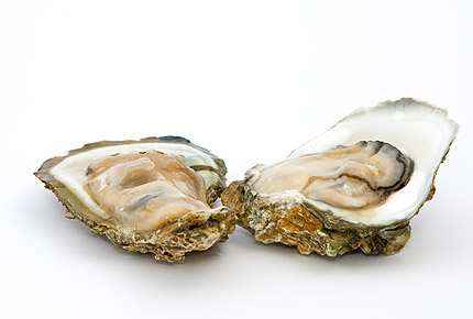 happy foods oysters