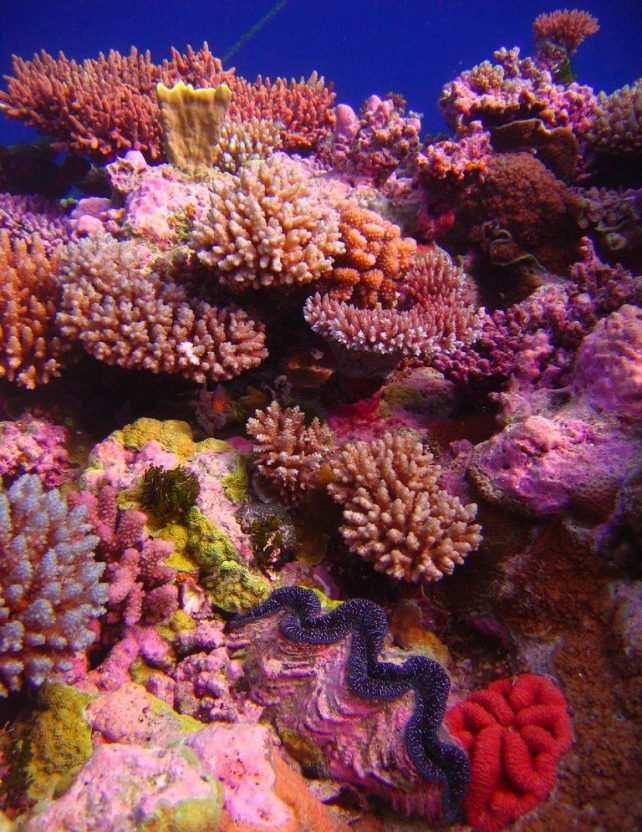 coral garden in camiguin