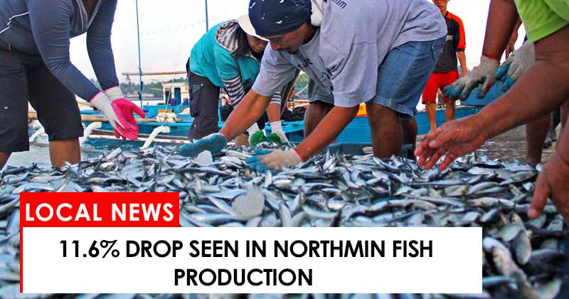 11.6% drop seen in NorthMin fish production