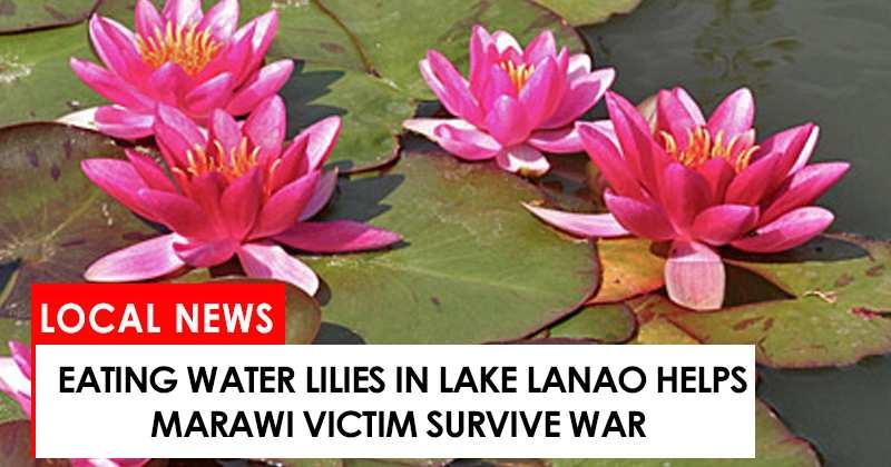 Eating waterlilies help marawi victim survive war