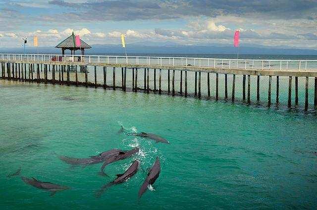 Experience Marine Life at Misamis Occidental Aqua Marine Park and Dolphin Island
