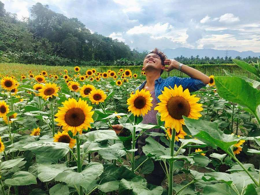 Sunflower field in South Cotabato