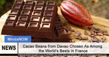Cacao beans in Davao chosen as among the best in the world
