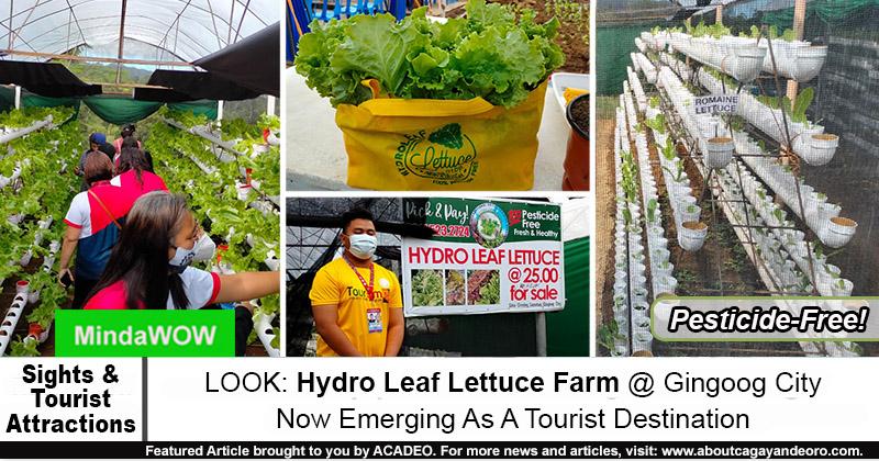 Hydro Leaf Lettuce Farm