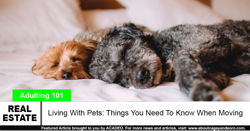 living with pets moving to a new home
